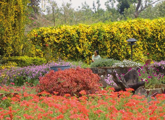 Chaakterystyczny-ogród-w-Kodagu  /Wydawnictwo Otwarte