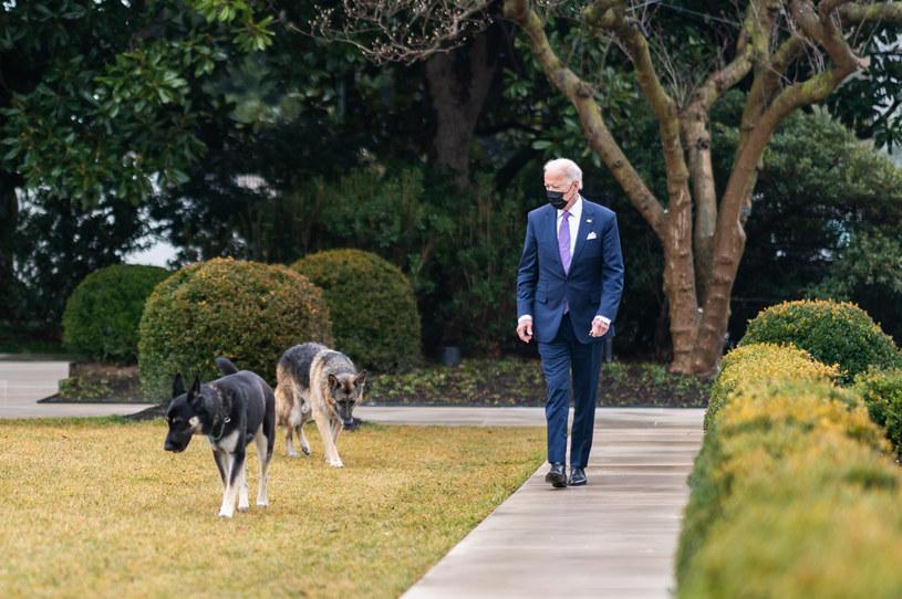 """Champ i Major (ciemny) - """"pierwsze psy"""" w Białym Domu /White House/Zuma Press /Agencja FORUM"""