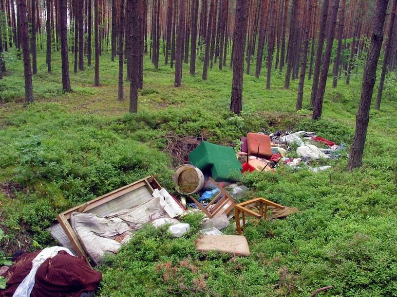 Chciał oszczędzić i wywiózł śmieci do lasu. Zapłaci dużo więcej /Włodzimierz Wasyluk /Agencja FORUM
