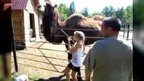 Chciała mieć zdjęcie z wielbłądem. Finał?