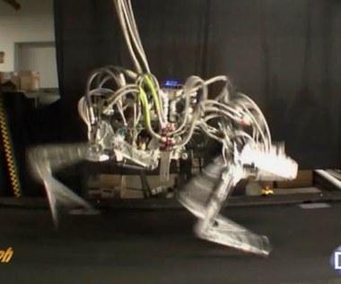 Cheetah - najszybszy robot na świecie