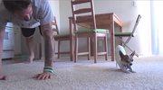 Chihuahua ćwiczy jogę. Potrafisz tak?