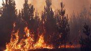 Chile: Sześć ofiar śmiertelnych wielkich pożarów lasów
