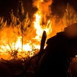 Chile walczy z 40 pożarami lasów, 75 pożarów opanowano