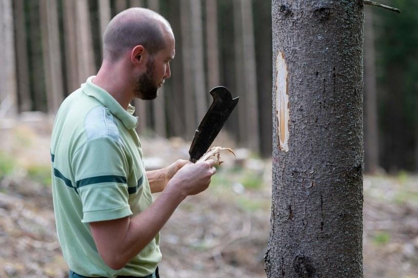 Chińczycy w 2020 r. wywieźli 44% drewna użytkowego z Polski /AFP