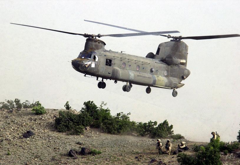 Chinoock - koń roboczy amerykańskiej armii /Getty Images/Flash Press Media