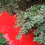 Chińska rzeka zmieniła kolor na czerwony