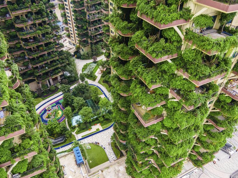 Chińskie osiedle Qiyi City Forest Garden w Chengdu, które powstało w 2018 roku, przypomina dżunglę /ICHPL Imaginechina /East News