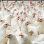 Chiny: Mężczyzna zakażony ptasią grypą H5N6. Ten wirus może wywołać pandemię