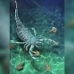 Chiny: Odkryto skamielinę skorpiona morskiego datowaną na ok. 435 mln lat. Jest wielkości psa