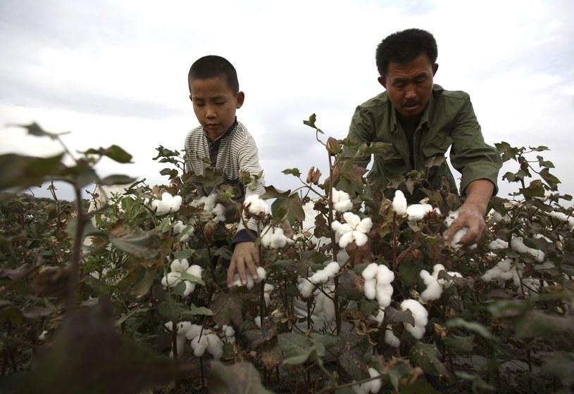 Chiny. Praca na plantacji bawełny /Getty Images/Flash Press Media