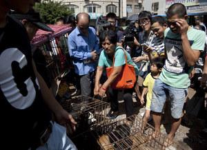 Chiny: Wydała całe oszczędności, żeby kupić 100 psów