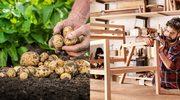 Chip  Board: meble z ziemniaków. Czy Polska stanie się potęgą eksportową?