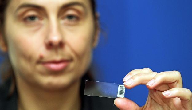 Chip do badań genetycznych pomocnych w wykrywaniu predyspozycji do raka/fot. Radek Pietruszka /PAP