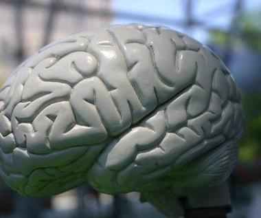 Chip naśladujący mózg
