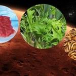 Chipsy z owadów i mięso z probówki. NASA ujawnia menu kolonizatorów Marsa