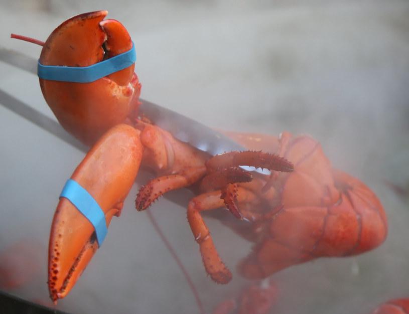 Chitynę pozyskuje się ją z pancerzy morskich skorupiaków np. krabów i małż /123RF/PICSEL