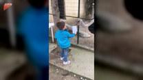 Chłopiec karmił strusia w zoo. Nagle...