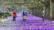 Chodźmy na spacer tam, gdzie właśnie rozkwita wiosna