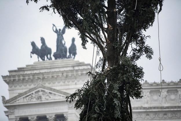 Choinka na Placu Weneckim w Rzymie /MASSIMO PERCOSSI /PAP/EPA