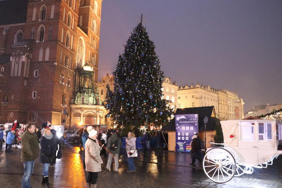 Choinka na Rynku Głównym w Krakowie - przed zapaleniem lampek /Józef Polewka /RMF FM