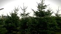 Choinka pełna symboli. Co wieszamy na świątecznym drzewku?