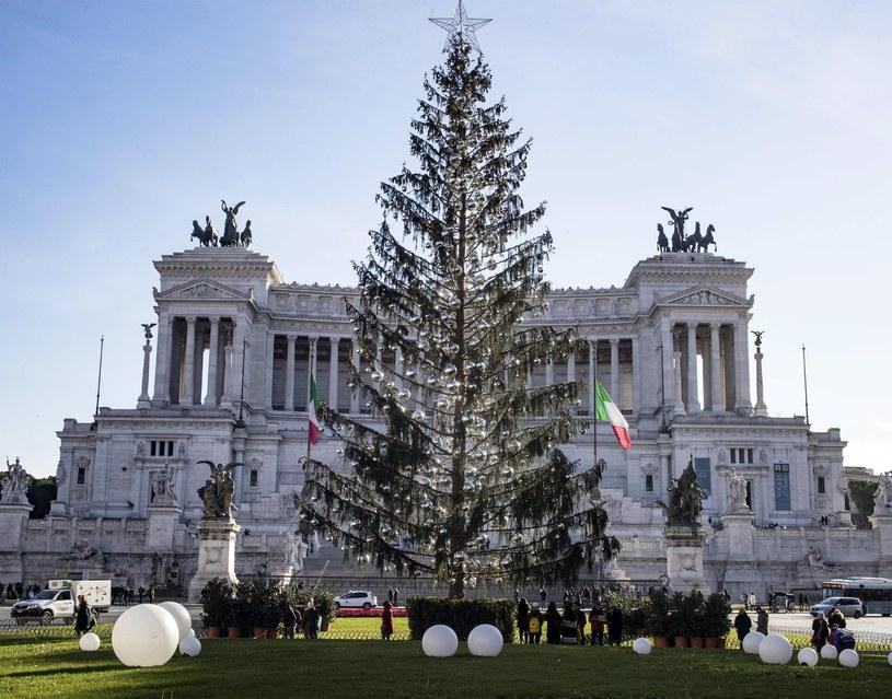 """Choinka w Rzymie nazywana jest """"łysym drapakiem"""" /MASSIMO PERCOSSI /PAP/EPA"""