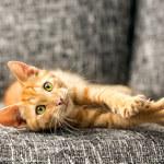 Choroba kociego pazura: Czym jest i jak się objawia?
