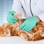 Choroby kotów: Objawy i leczenie