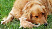 Choroby odzwierzęce. Czym można zarazić się od zwierząt?