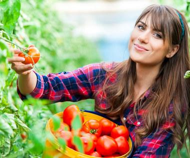 Choroby pomidorów: Jak zwalczać?