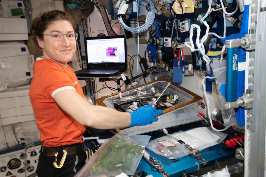 Christina Koch podczas badań biologicznych na ISS /NASA /Materiały prasowe
