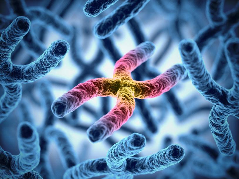 Chromosom X /123RF/PICSEL