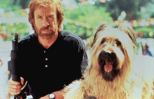 Chuck Norris też miał swojego ulubionego czworonoga /AKPA