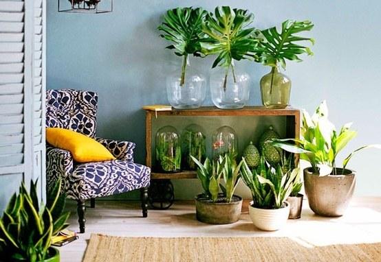 chusteczki do czyszczenia roślin /© Photogenica