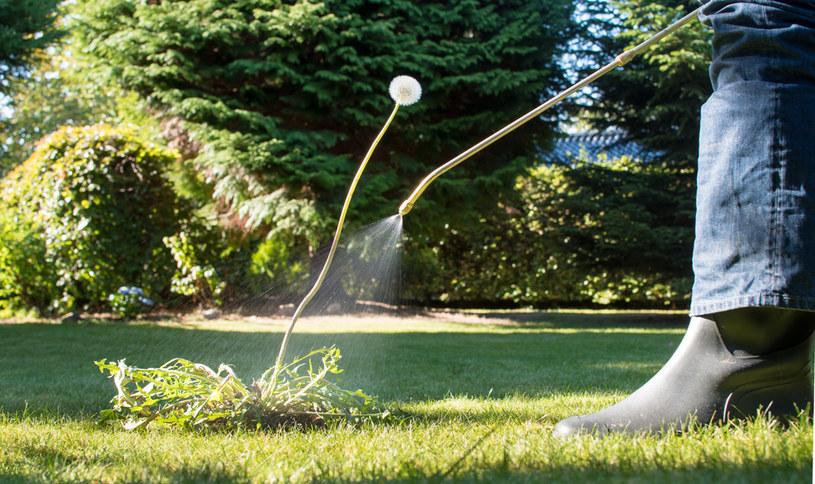 Chwasty w ogrodzie to zmora każdego ogrodnika /123RF/PICSEL