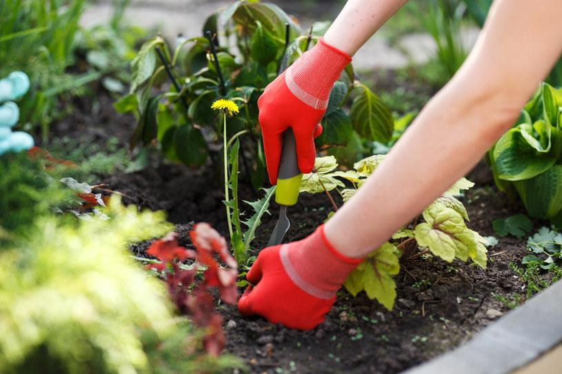 Chwasty zaduszają rośliny /123RF/PICSEL