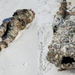 Ciało bez głowy. Niecodzienne znalezisko na Florydzie