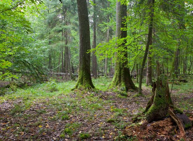 Ciało nastolatki znaleziono w lesie/ Zdjęcie ilustracyjne /123RF/PICSEL