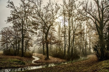 Ciało zakopane w lesie, na szyi zaciśnięty pasek. Makabryczne informacje nt. zabójstwa 16-letniej Anny