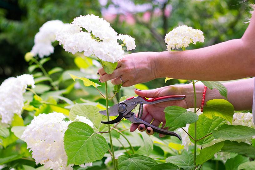 Cięcie kwiatów /©123RF/PICSEL
