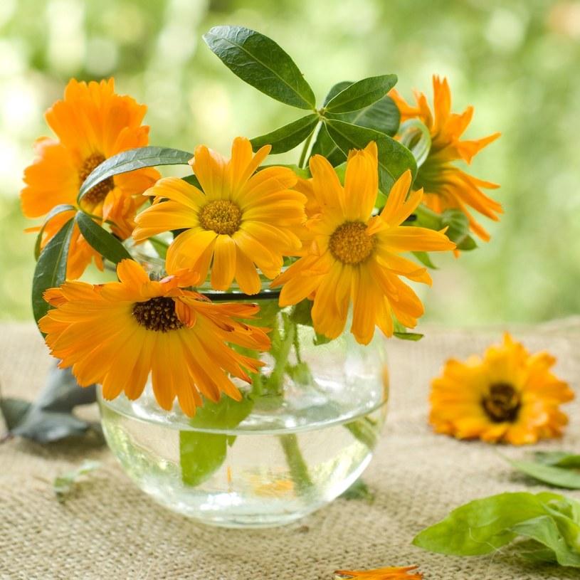 Cięte kwiaty mogą dłużej zachować świeżość /123RF/PICSEL
