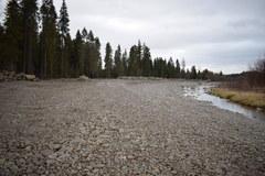 Ciężki sprzęt dewastuje rezerwat Przełom Białki