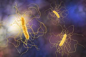 Clostridioza - groźne powikłanie po COVID-19. Dr Paweł Grzesiowski: To druga epidemia