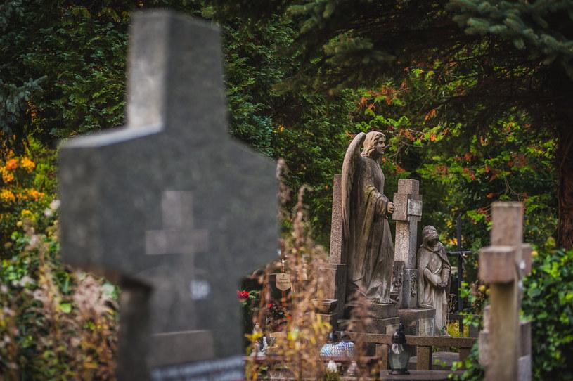 Cmentarz, Gdańsk Oliwa; Zdj. ilustracyjne /Karol Makurat /Reporter