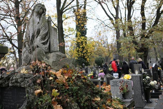 Cmentarz Rakowicki w Krakowie /fot. S. Rozpędzik /PAP