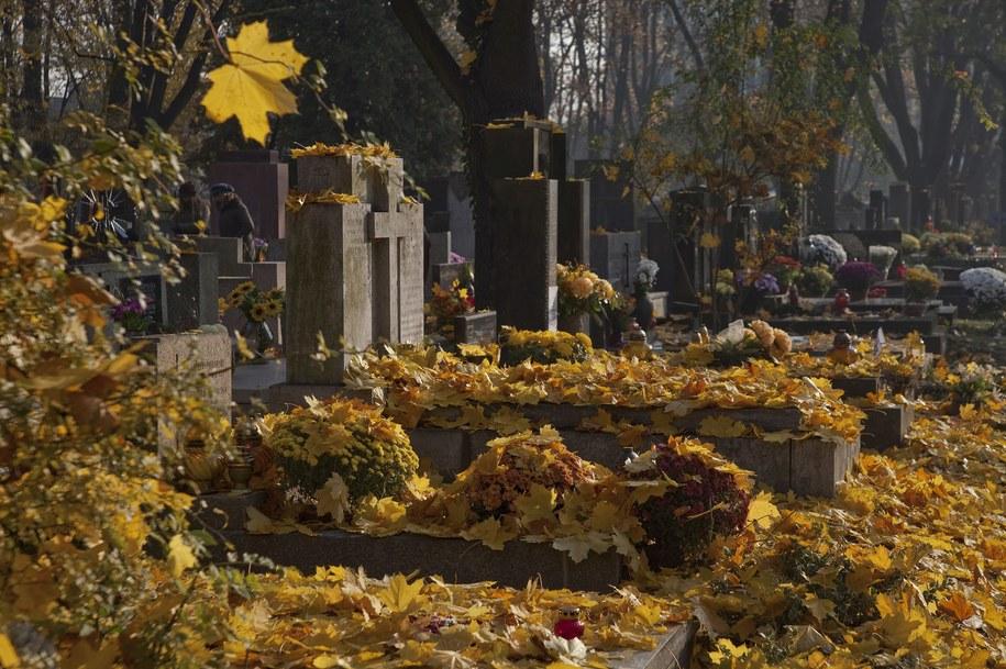 Cmentarz Rakowicki w Krakowie /Jerzy Ochoński   /PAP