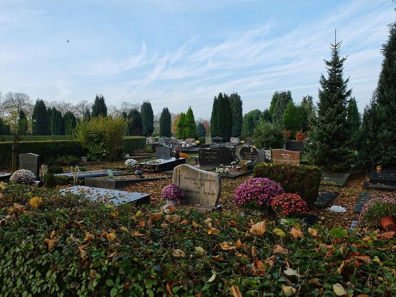 Cmentarz Schoonselhof w Hoboken /Wikimedia Commons /domena publiczna