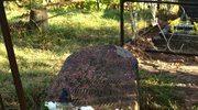 Cmentarz w Powiewiórce na Litwie