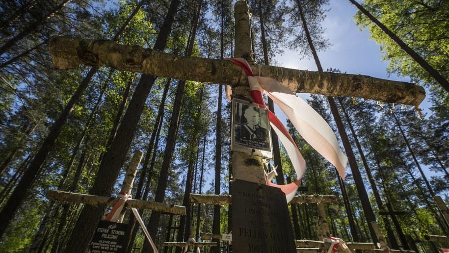 Cmentarz wojskowy w Miednoje /Sergei Ilnitsky /PAP/EPA